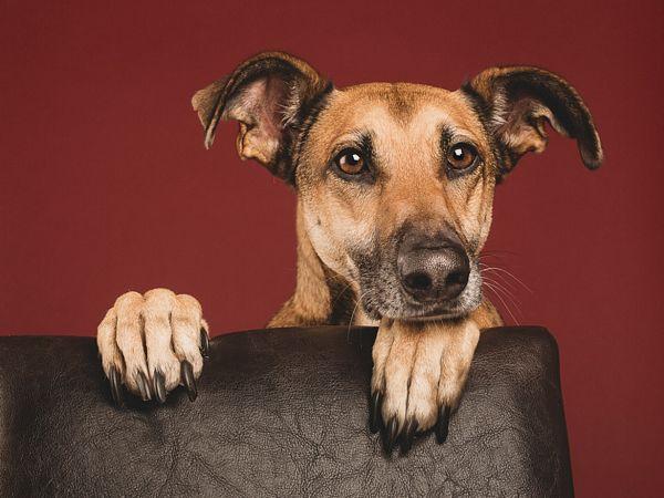 fotografias-caninas-Elke-Vogelsang-1