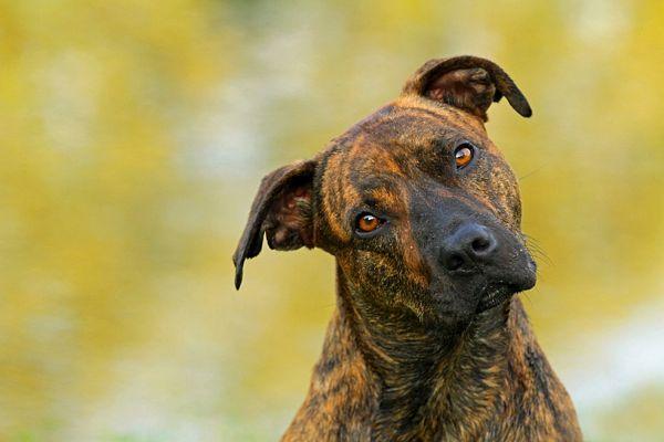 fotografias-caninas-Elke-Vogelsang-10