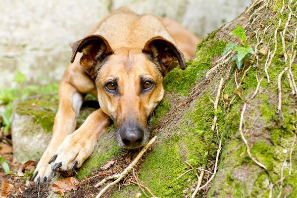fotografias-caninas-Elke-Vogelsang-11