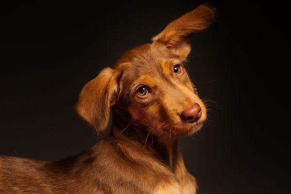 fotografias-caninas-Elke-Vogelsang-2