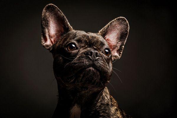 fotografias-caninas-Elke-Vogelsang-7
